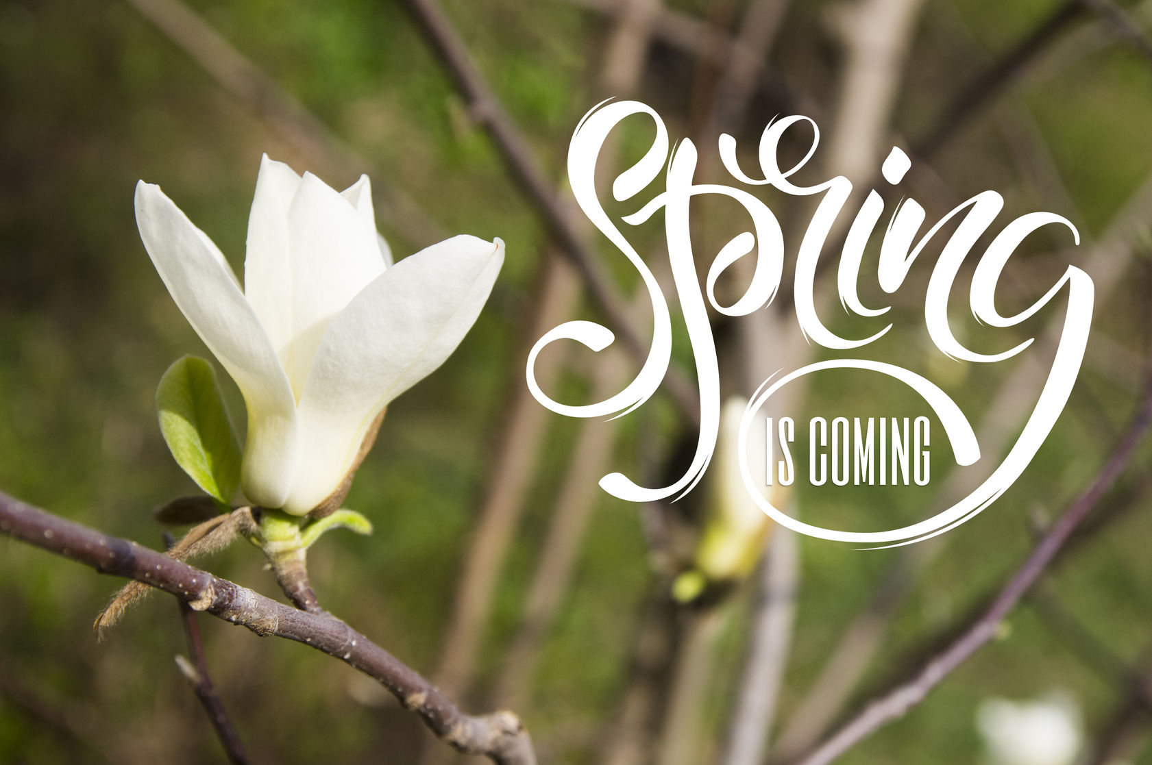 Ayurvedic Guidelines for Spring (and how to beat those allergies)